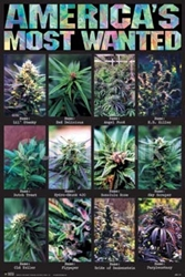 Americas Most Wanted weed, pot, reefer, marijuana